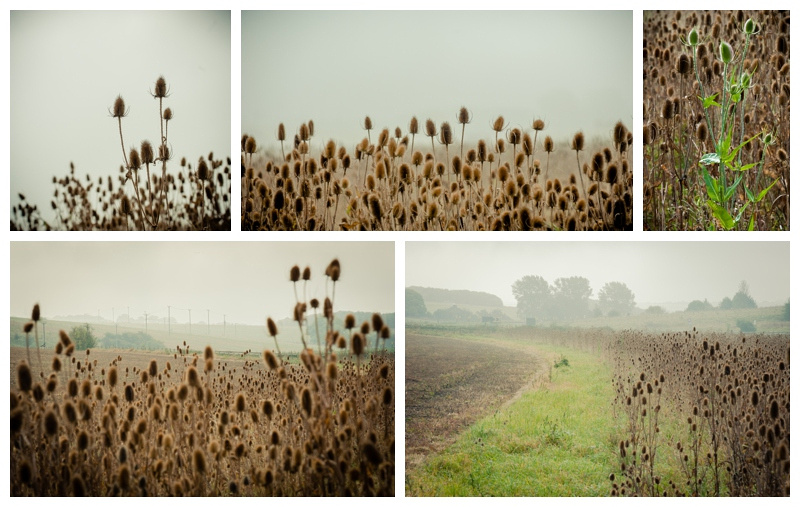 Tizzles, Spikies, taken near West Down Camp in WIltshire by wedding photographer Barbara Leatham
