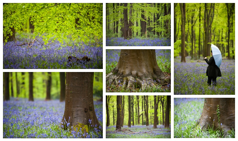 The beautiful bluebell woods at West Woods in WIltshire, by wedding photographer Barbara Leatham